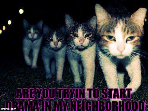 Wrong Neighboorhood Cats