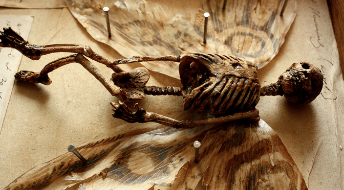 Weird Skeletons Discovered In The Basement Of An Old Home In London